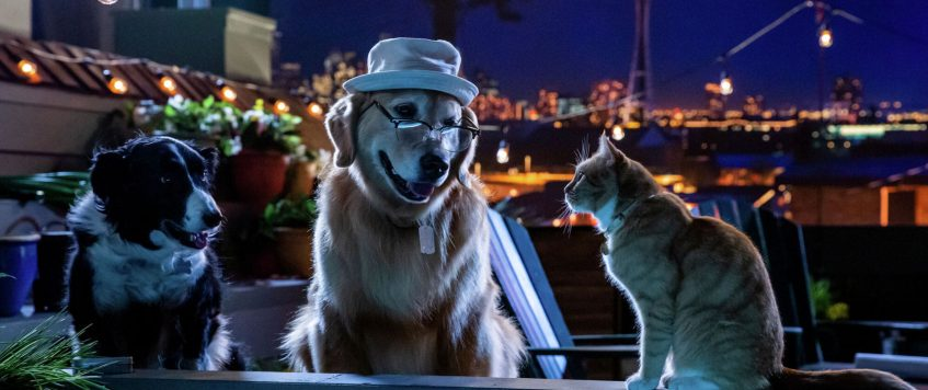 720p~ Cats & Dogs 3: Paws Unite 2020 Watch Online Full Movie